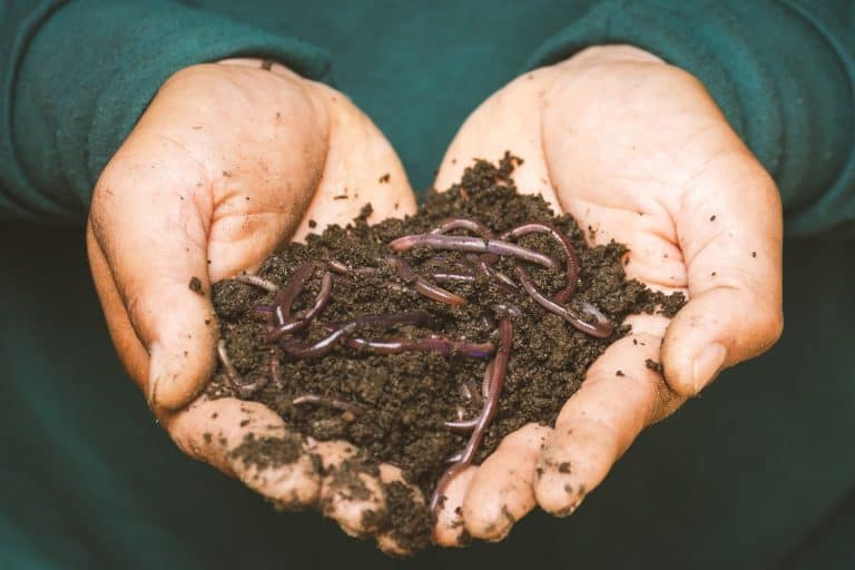 How to Start a Worm Farm for Profit and Make Passive Income